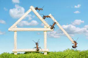 Zimt gegen Ameisen