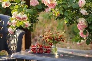 Rosenbogen selber bauen