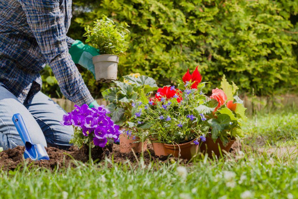 Verwilderten Garten herrichten