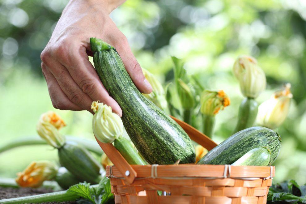 Zucchini düngen