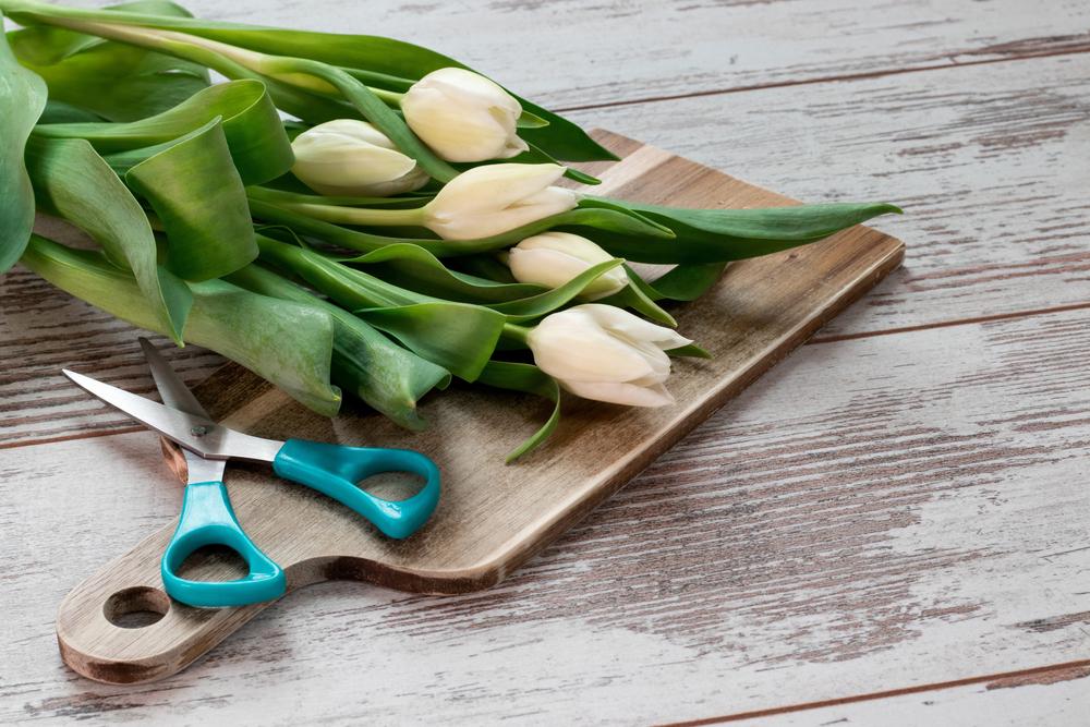 beschnittene tulpen